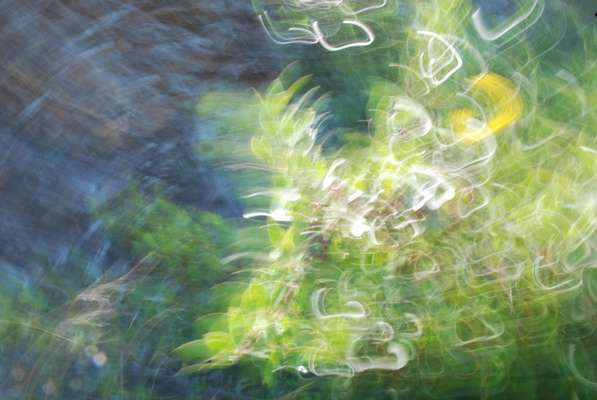 Buy abstract fine art : Soulflowers 9