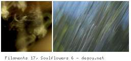 Filaments 17, Soulflowers 6
